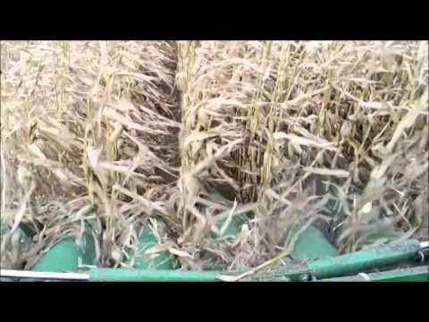 Las dos caras de los biocombustibles
