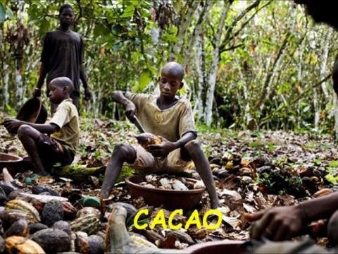 África fuente de vida