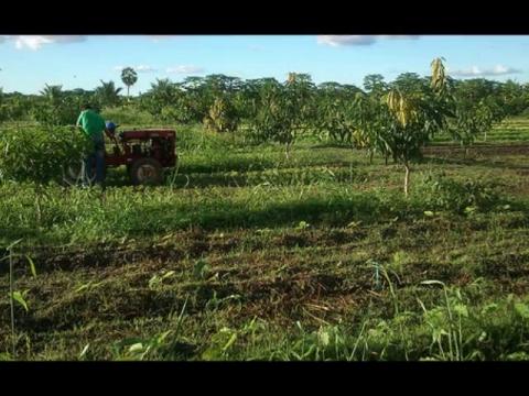 Agricultura justa
