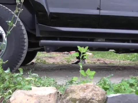 Una verdura de mi huerto