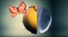 El efecto mariposa - clipmetraje ganador de Castilla y León