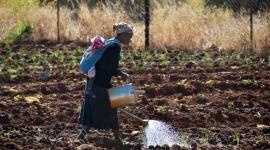 El hambre, principal riesgo de salud a nivel mundial